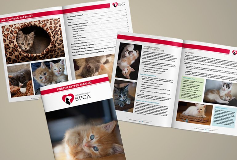 SFSPCA Kitten Manual Project