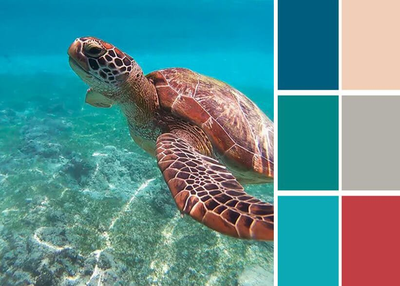 Sea turtle image with color blocks pulled out